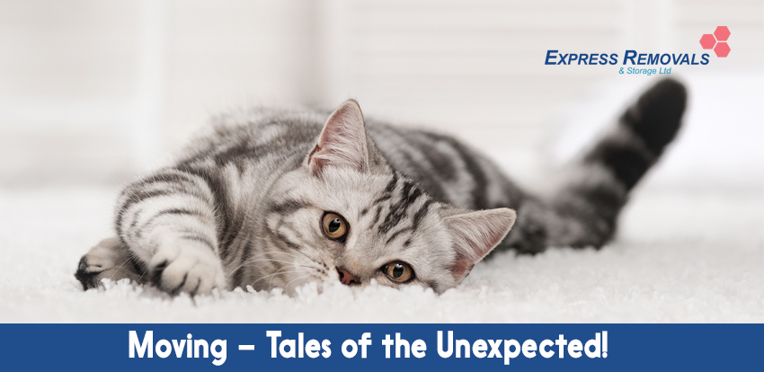 Moving – Tales Of The Unexpected!