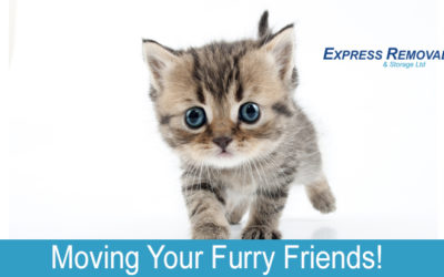 Moving Your Furry Friends!